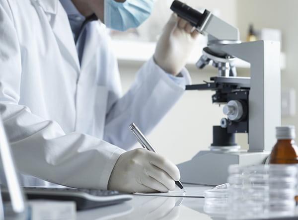 Ученые намерены использовать растительную целлюлозу для роста костной ткани